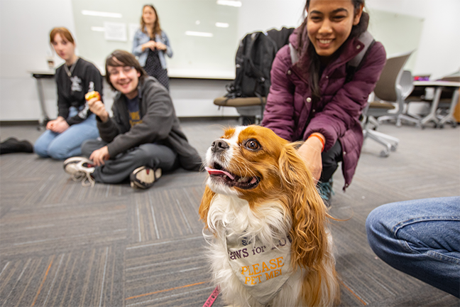 PUPPY POWER—Students enjoyed end-of-the-semester activities at the Silverman Library as part of the University of Buffalo Libraries' Stress Relief Days in December 2019. The offerings included therapy dogs, pingpong, and aromatherapy bracelets.